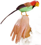 Feather-Parrot-For-Wrist
